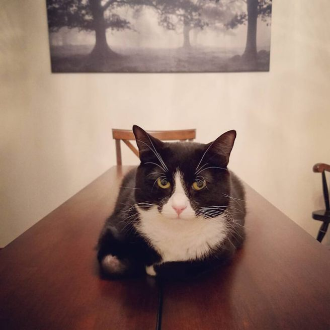 Hansel sitting on a table judging you
